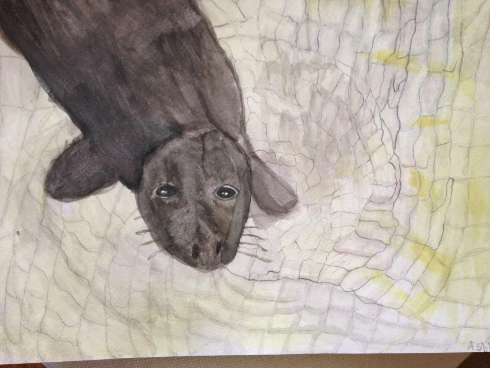Animal Kindness Children S Art Club