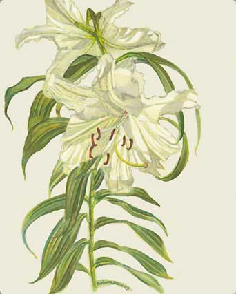 Garden Lily giclee fine art reproduction