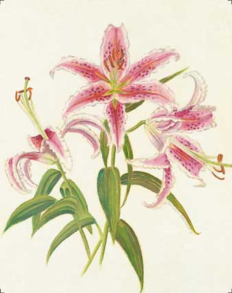 Star Gazer Lily-I giclee fine art reproduction